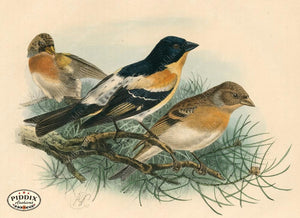 Pdxc1385 -- Birds Color Illustration