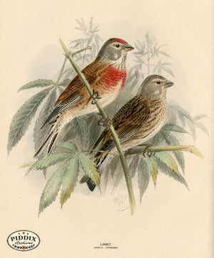 Pdxc1387 -- Birds Color Illustration