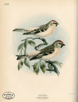 Pdxc1388 -- Birds Color Illustration