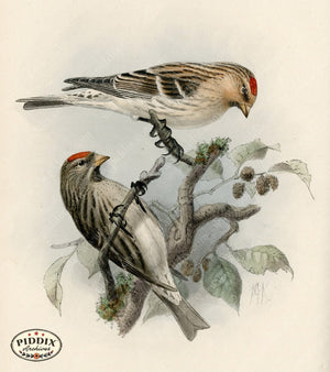 Pdxc1389 -- Birds Color Illustration