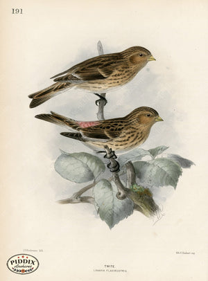 Pdxc1390 -- Birds Color Illustration