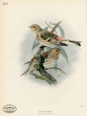 Pdxc1391 -- Birds Color Illustration