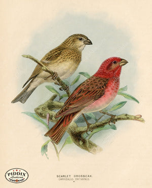 Pdxc1392 -- Birds Color Illustration