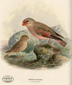 Pdxc1393 -- Birds Color Illustration