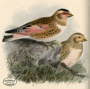 Pdxc1394 -- Birds Color Illustration