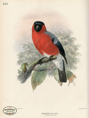 Pdxc1395 -- Birds Color Illustration