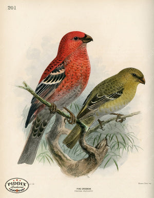 Pdxc1397 -- Birds Color Illustration