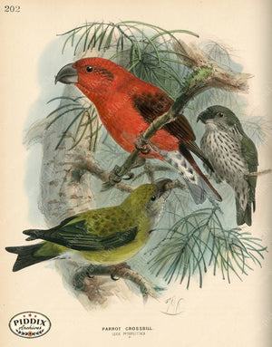 Pdxc1399 -- Birds Color Illustration