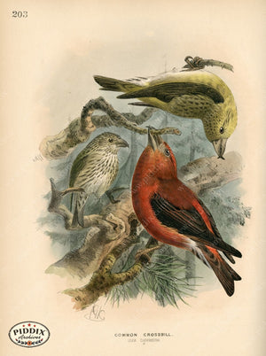 Pdxc1400 -- Birds Color Illustration