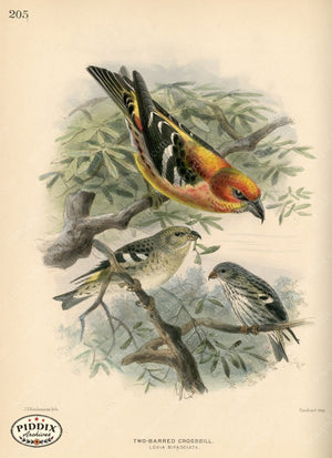 Pdxc1402 -- Birds Color Illustration