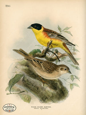 Pdxc1403 -- Birds Color Illustration
