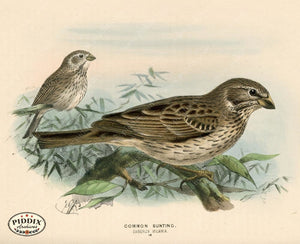 Pdxc1406 -- Birds Color Illustration