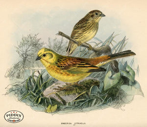 Pdxc1407 -- Birds Color Illustration