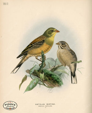Pdxc1409 -- Birds Color Illustration