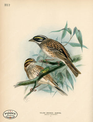 Pdxc1410 -- Birds Color Illustration