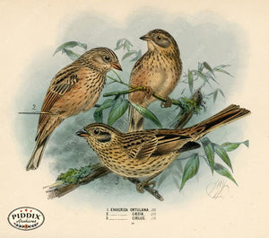 Pdxc1413 -- Birds Color Illustration