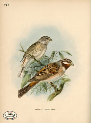 Pdxc1415 -- Birds Color Illustration