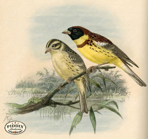 Pdxc1416 -- Birds Color Illustration