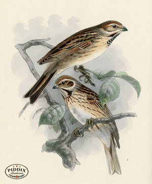 Pdxc1419 -- Birds Color Illustration