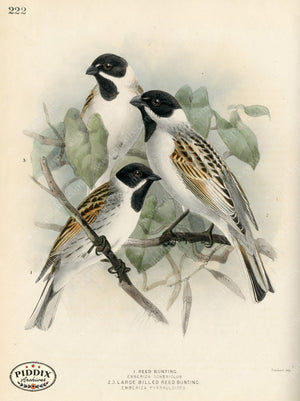 Pdxc1420 -- Birds Color Illustration