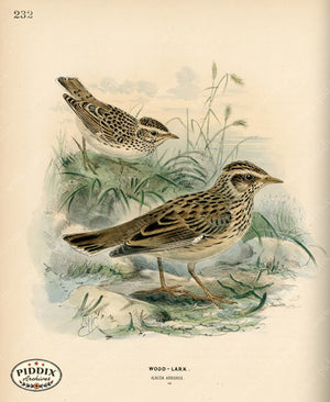 Pdxc1430 -- Birds Color Illustration