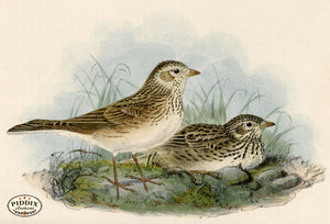 Pdxc1434 -- Birds Color Illustration