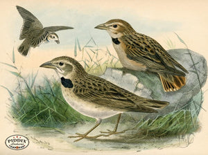 Pdxc1436 -- Birds Color Illustration