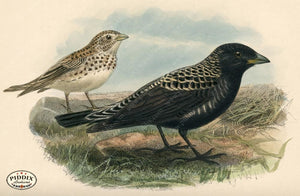 Pdxc1439 -- Birds Color Illustration