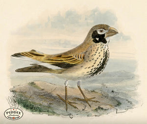 Pdxc1440 -- Birds Color Illustration