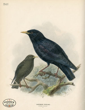 Pdxc1446 -- Birds Color Illustration