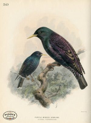 Pdxc1447 -- Birds Color Illustration