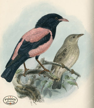 Pdxc1448 -- Birds Color Illustration