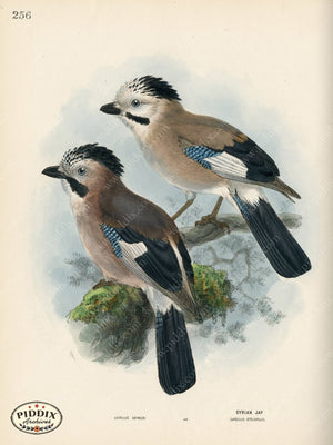 Pdxc1454 -- Birds Color Illustration