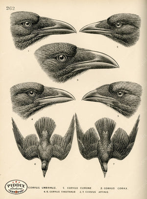 Pdxc1458 -- Birds Color Illustration