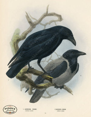 Pdxc1459 -- Birds Color Illustration