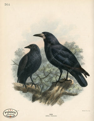 Pdxc1460 -- Birds Color Illustration