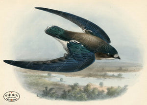 Pdxc1465 -- Birds Color Illustration