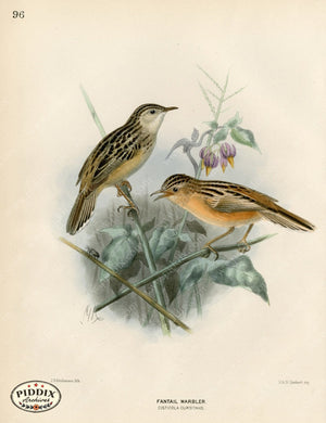 Pdxc1468 -- Birds Color Illustration