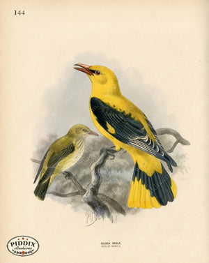 Pdxc1469 -- Birds Color Illustration