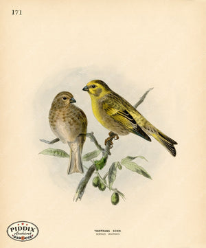 Pdxc1470 -- Birds Color Illustration