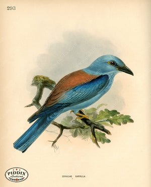 Pdxc1472 -- Birds Color Illustration