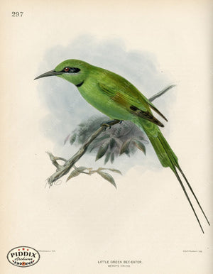Pdxc1473 -- Birds Color Illustration