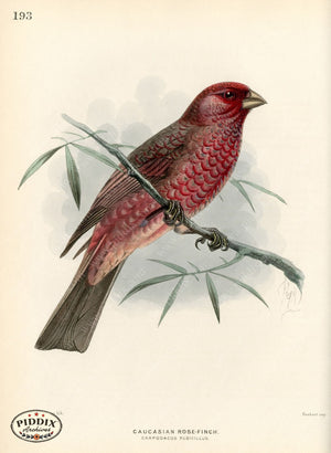Pdxc1475 -- Birds Color Illustration
