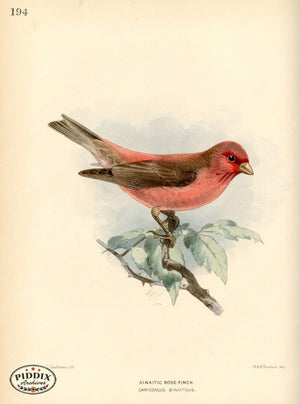 Pdxc1476 -- Birds Color Illustration