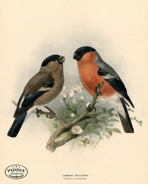 Pdxc1477 -- Birds Color Illustration