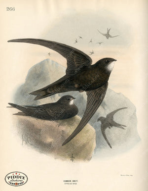 Pdxc1478 -- Birds Color Illustration