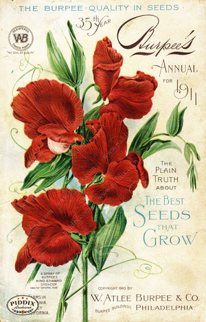 Pdxc1479 -- Flower Seed Catalogs Color Illustration