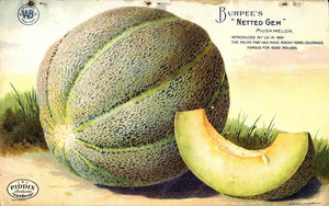 Pdxc1487 -- Fruit & Vegetable Seed Catalogs Color Illustration