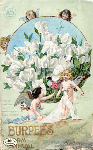 Pdxc1490 -- Flower Seed Catalogs Color Illustration