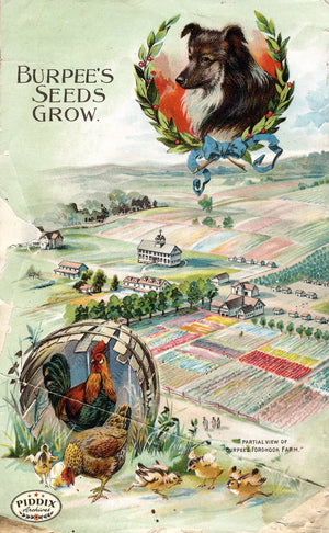 Pdxc1491 -- Fruit & Vegetable Seed Catalogs Color Illustration